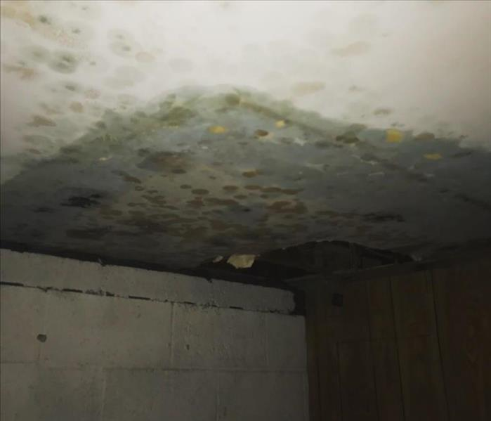 Black Mold In The Attic Before
