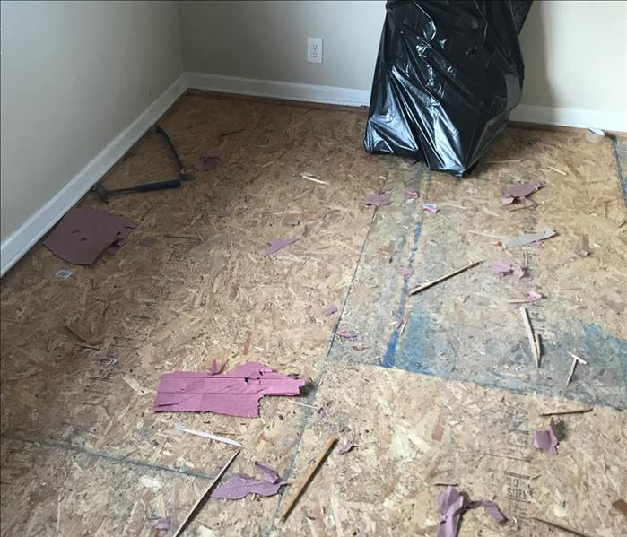 Mold Remediation Mold Under The Carpet